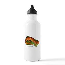 Red Salamander Water Bottle