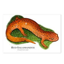 Red Salamander Postcards (Package of 8)