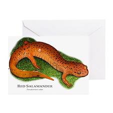 Red Salamander Greeting Cards (Pk of 20)