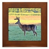 7 point buck Framed Tile