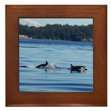 Framed Orca Tile