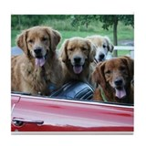 Golden retreiver Drink Coasters