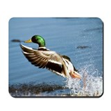Mallard Drake Mousepad