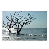 Edisto SC Postcards: Ghost Trees (Pkg of 8)