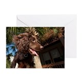 Cute Boykin spaniel Greeting Cards (Pk of 20)