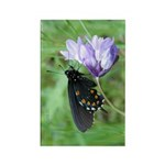 Butterfly & Brodaiea Rectangle Magnet
