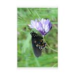 Butterfly & Brodaiea Mini Poster Print