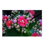 .pink kalanchoe. Postcards (Package of 8)