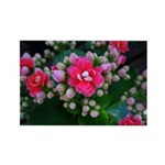 .pink kalanchoe. Rectangle Magnet