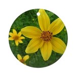 .coreopsis. Ornament (Round)