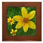 .coreopsis. Framed Tile