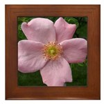 .light pink rose. Framed Tile