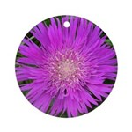 .stoke's aster. Ornament (Round)