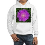 .stoke's aster. Hooded Sweatshirt