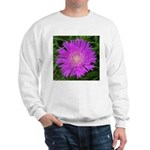 .stoke's aster. Sweatshirt