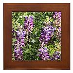 California Lupine Framed Tile