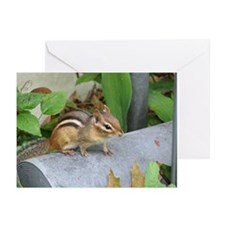Garden Bandit Greeting Cards (Pk of 10)