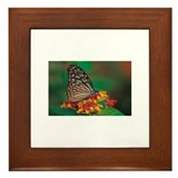 Butterfly300 Framed Tile