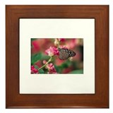 Butterfly301 Framed Tile