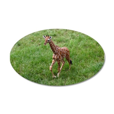 Baby Giraffe 38.5 x 24.5 Oval Wall Peel