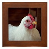 Chicken Framed Tile