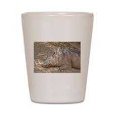 Warthog In Repose Shot Glass