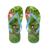 Black-chinned Hummingbird Flip Flops