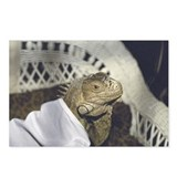 Iguana in Tee Postcards (Package of 8)