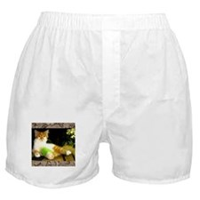 Kitten with a leg cast Boxer Shorts