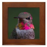 Hummingbird Framed Tile