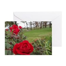 """Red Roses In Park"" Greeting Card"