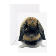 Holland Lop Rabbit Tort Greeting Card