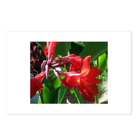 Red Canna Postcards (Package of 8)