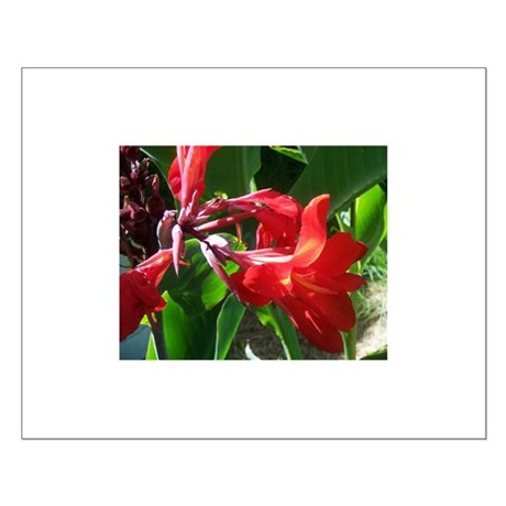 Red Canna Small Poster