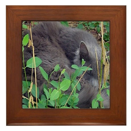 Kitten in Honeysuckle Framed Tile