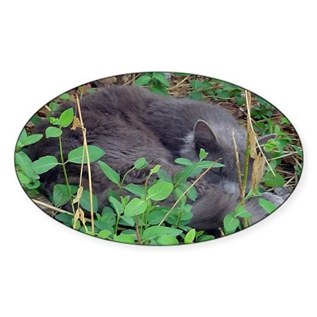 Kitten in Honeysuckle Oval Sticker