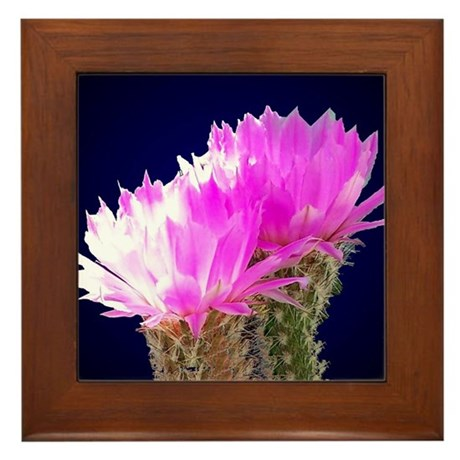 Cactus Blooms Framed Tile