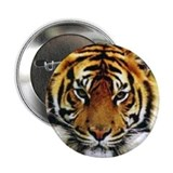 "Tiger Photo 2.25"" Button (10 pack)"