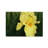 """Yellow Bearded Iris"" Rectangle Magnet"