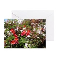 Trumpet Vine in bloom Cards (Pk of 10)