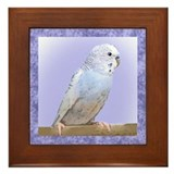 Blue Budgie Framed Tile