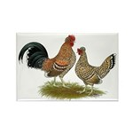 Pyncheon Bantams Rectangle Magnet (10 pack)