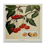 Cherry Print Tile Coaster