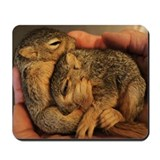 Squirrel Babies Mousepad