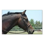 Show Horse Sticker (Rectangle 50 pk)