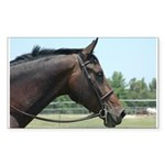 Show Horse Sticker (Rectangle 10 pk)