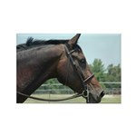 Show Horse Rectangle Magnet (10 pack)