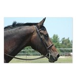 Show Horse Postcards (Package of 8)