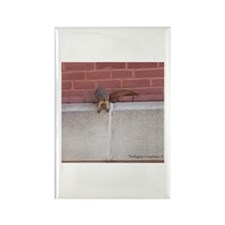 Hanging Out Squirrel Rectangle Magnet