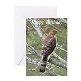 Broad-winged hawk Greeting Card